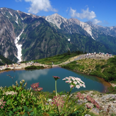 八方池と高山植物